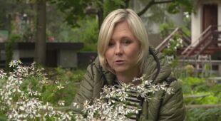 Pod okapem drzew (odc. 696 /HGTV odc. 34)