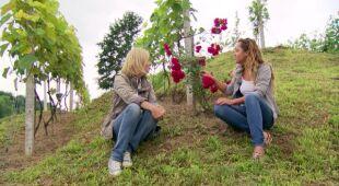 Winnica koło Sandomierza i Góry Pieprzowe (odc. 477)